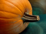 Pumpkin, from A to Z – The Pumpkin Challenge